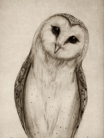 Barn Owl Sketch Art Print by Isaiah K. Stephens | Society6
