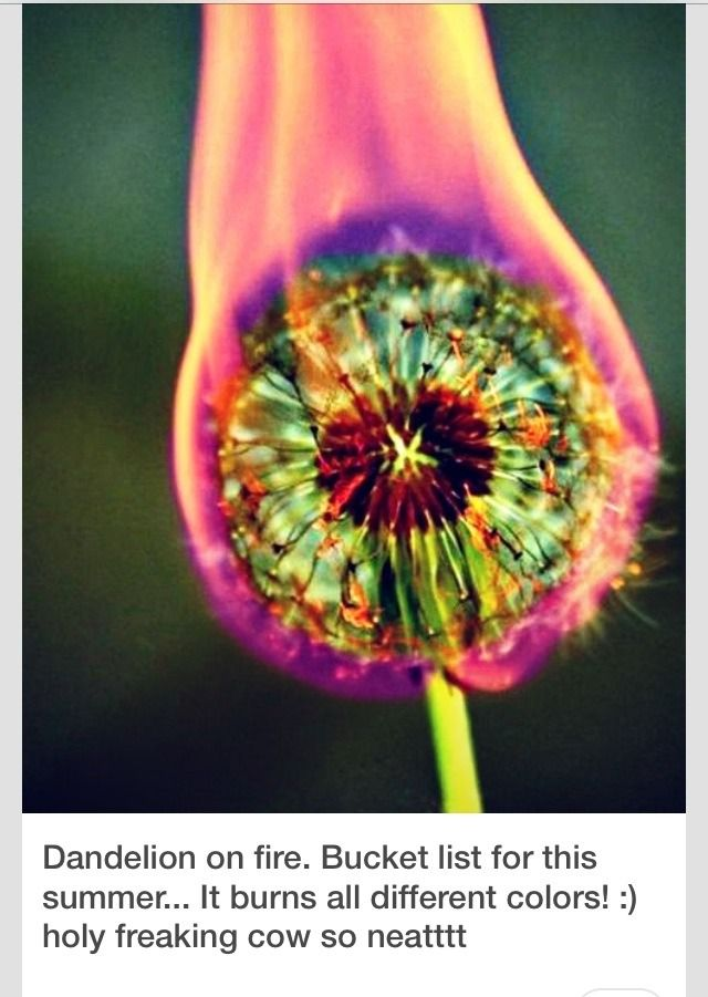 Amazingly Cool Photography Idea…