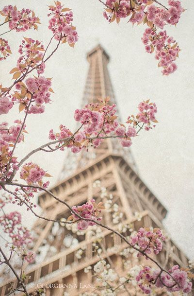 Beautiful Shops: Paris Photography – Eiffel Tower with Cherry Blossoms
