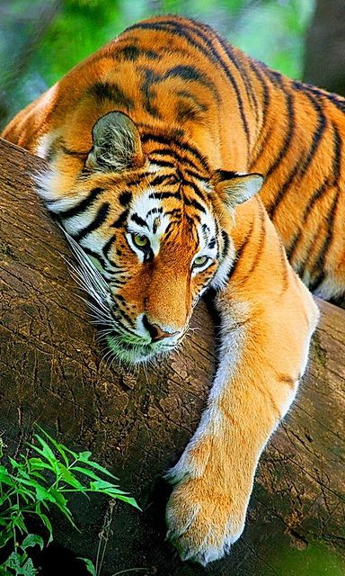 Of the most beautiful and most fascinating creatures on earth