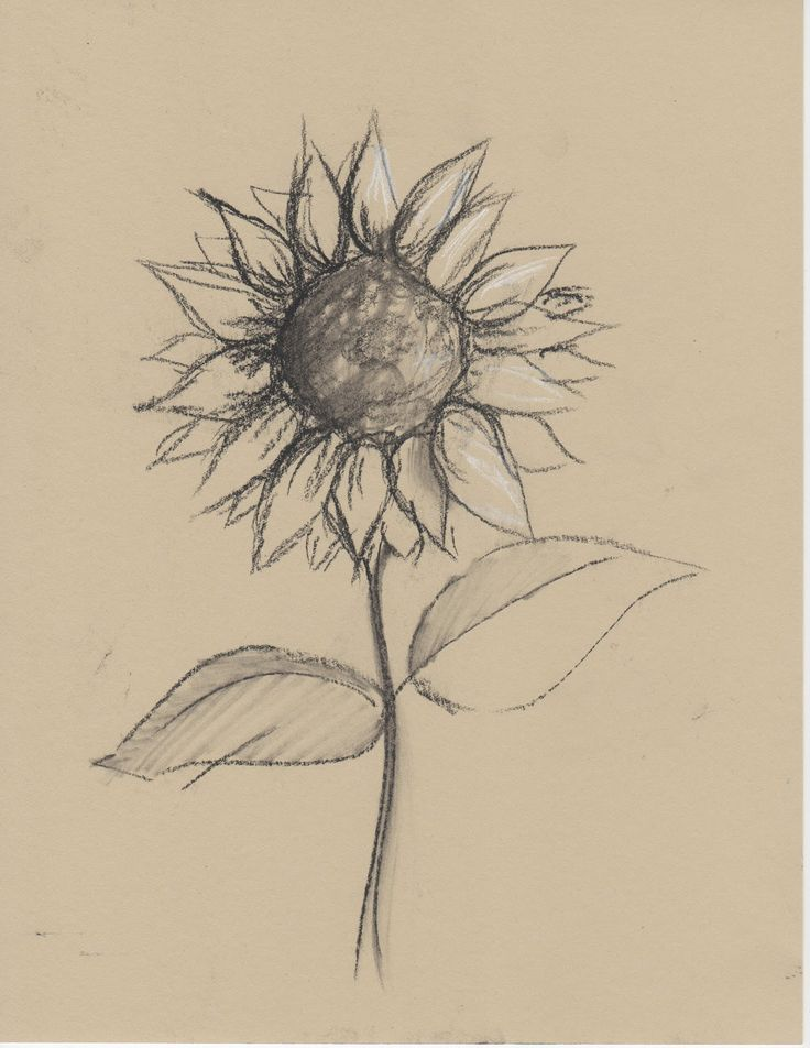 Black+and+White+Sketches+of+Flowers | any medium even just pencil and paper and …