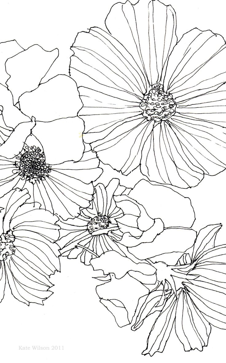 Part of a pen drawing of Cosmos and Sweet Peas drawn with a .25 Rotring pen on s…