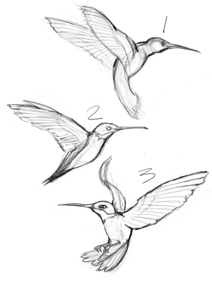 sketches of hummingbirds with flowers – Google Search