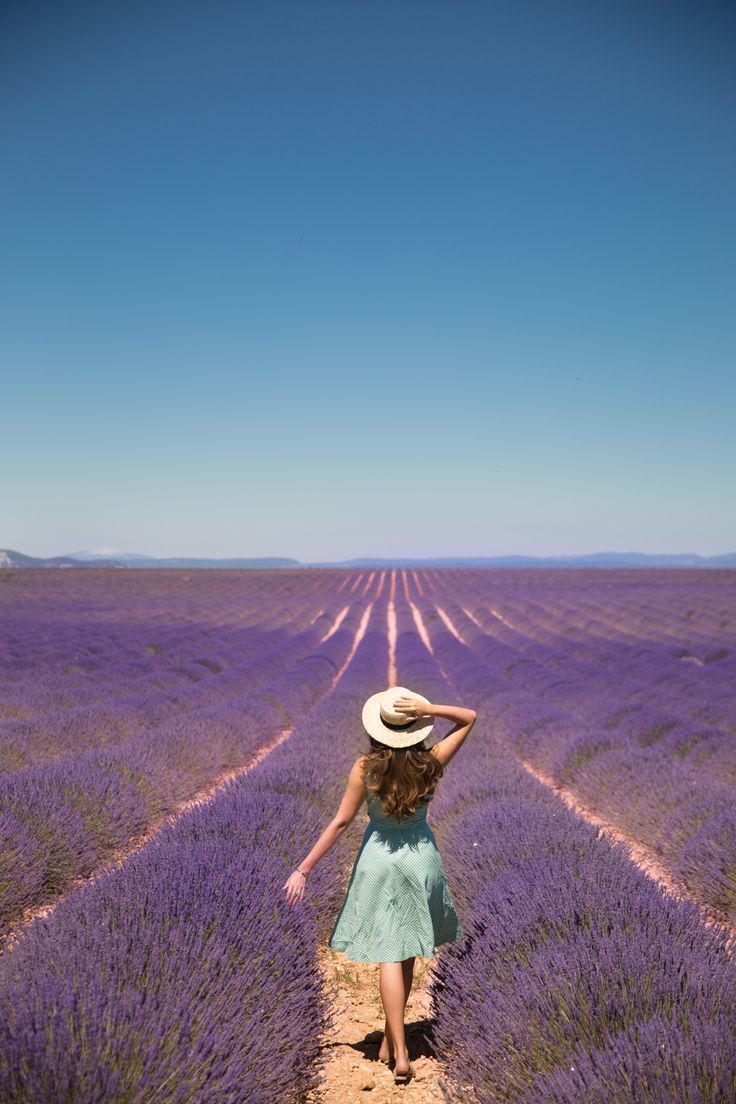 The Lavender Festival, Provence – The Londoner