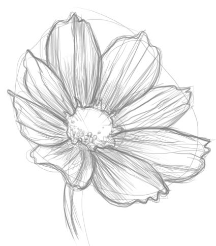 How to draw flowers – I already know how to stay a flower, but I still think it&…