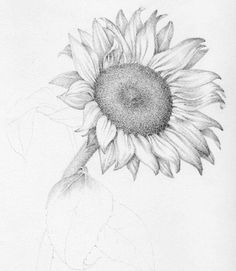 how to draw flowers in pencil – Google Search