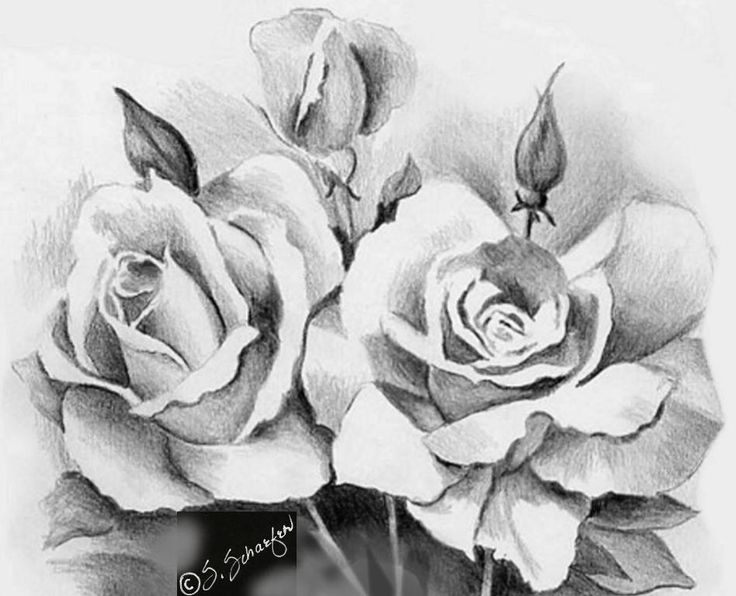 Beautiful Sketches of Flowers | … Beautiful Rose Flower Bouquet For Your Loved…