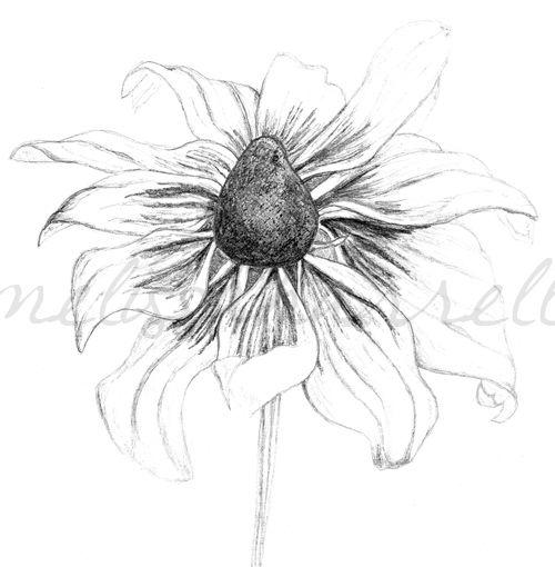 flower drawings | flower sketch | melissa harrell {blog}