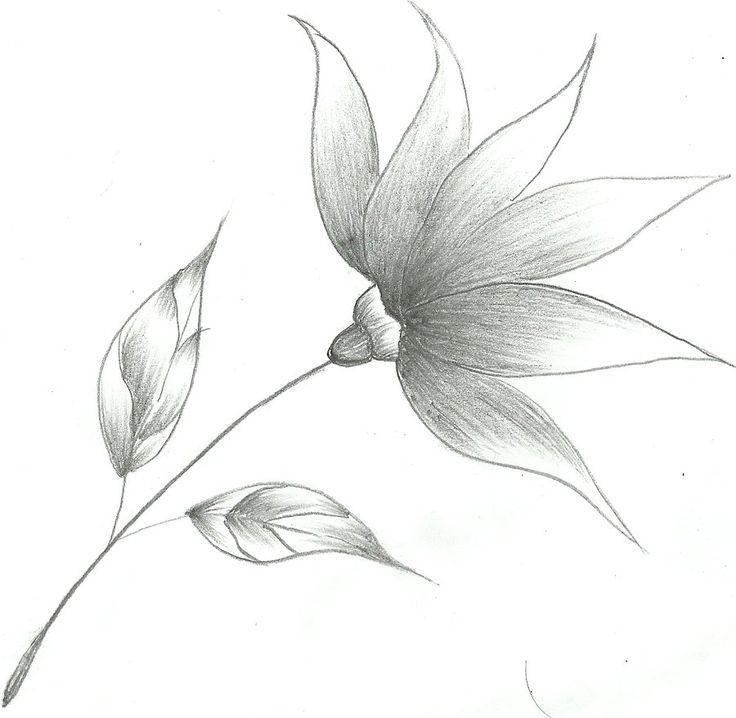 Neat Flower Sketch By Mubibuddy On Deviantart Zhbgsxm
