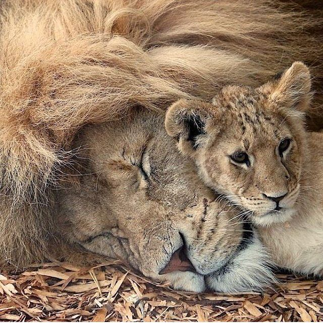 """4,254 Likes, 11 Comments – Wild Life (Brittany Eidsness) on Instagram: """"Father…"""