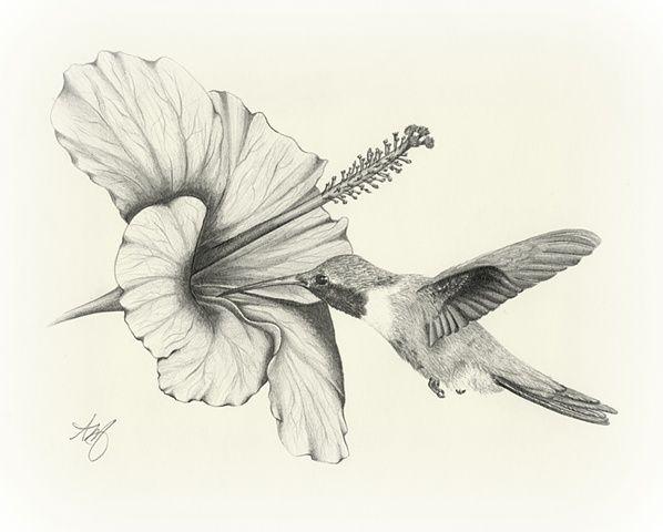 Amazing Pencil Drawings Flowers   drawing sketch art wildlife bird hummingbird f…