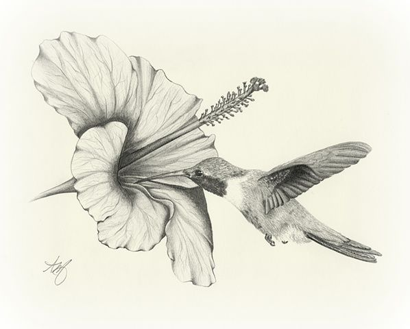 black+and+white+images+of+hummingbirds | … sketches of hummingbirds draw bison…