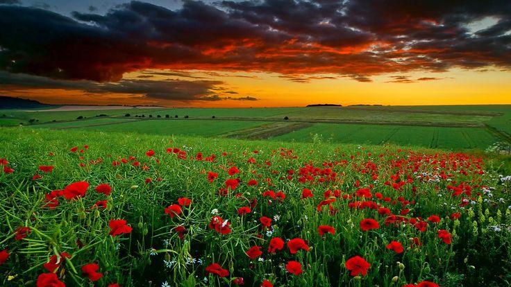 Flowers Landscape..[1920X1080]