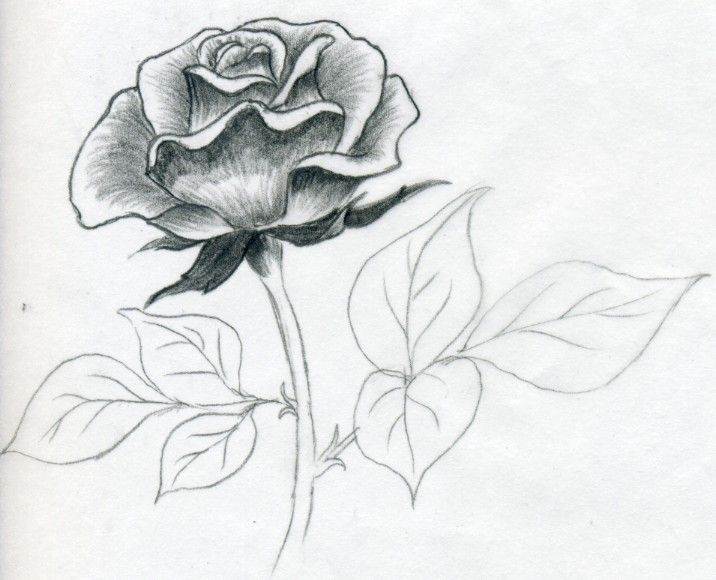 pencil sketches of roses heart and rose drawings in pencil free download clip ar…