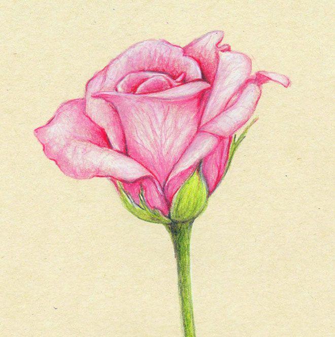 35 Beautiful Flower Drawings and Realistic Color Pencil Drawings | Read full art…