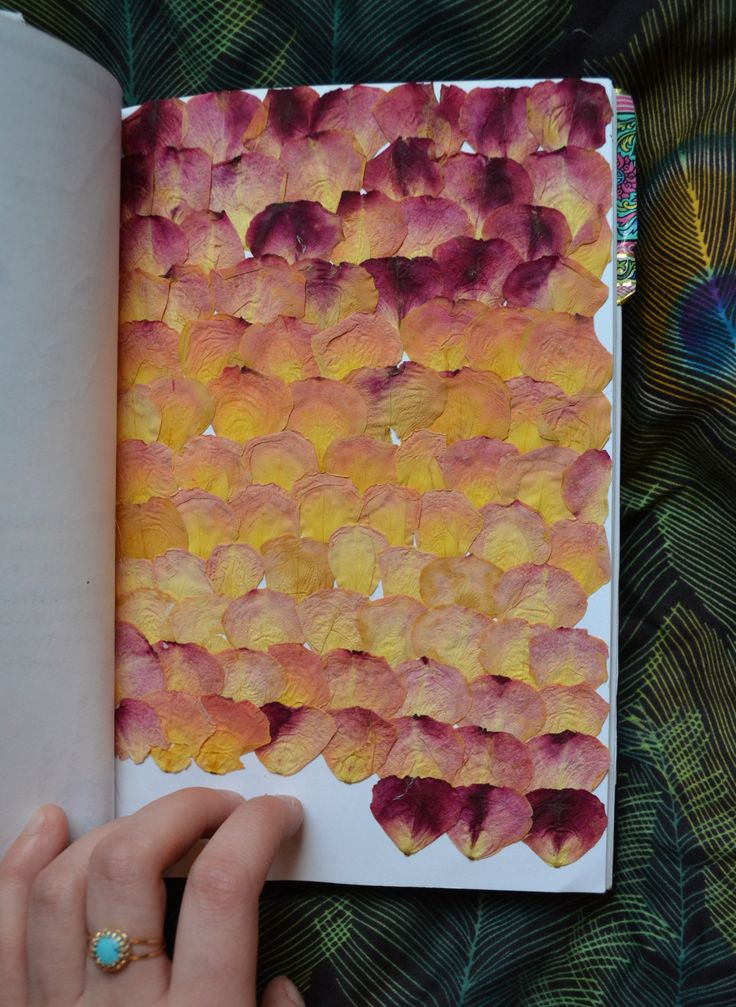 chic-ahh-go:  Sketchbook Page 59 Pressed rose petals. I had a giant bouquet of d…