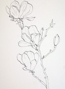 Drawing Pink Magnolia flowers – Pen and Ink plus Watercolor Wash