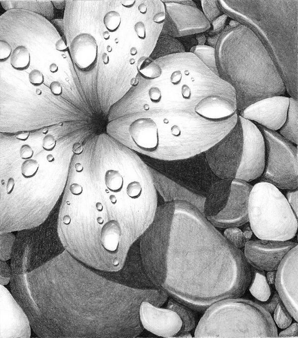 Image result for realistic drawings of flowers