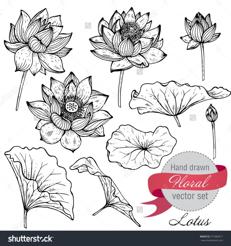 Vector Set Of Hand Drawn Lotus Flowers And Leaves. Sketch Floral Botany Collecti…