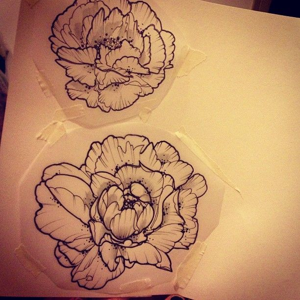 another pic of the line drawing peony i want, with another smaller one that i li…
