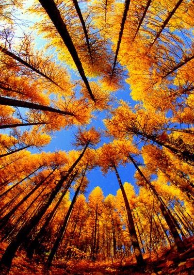 Fall Foliage Photography Idea: Look up! (fish eye lens optional)   The fact that…