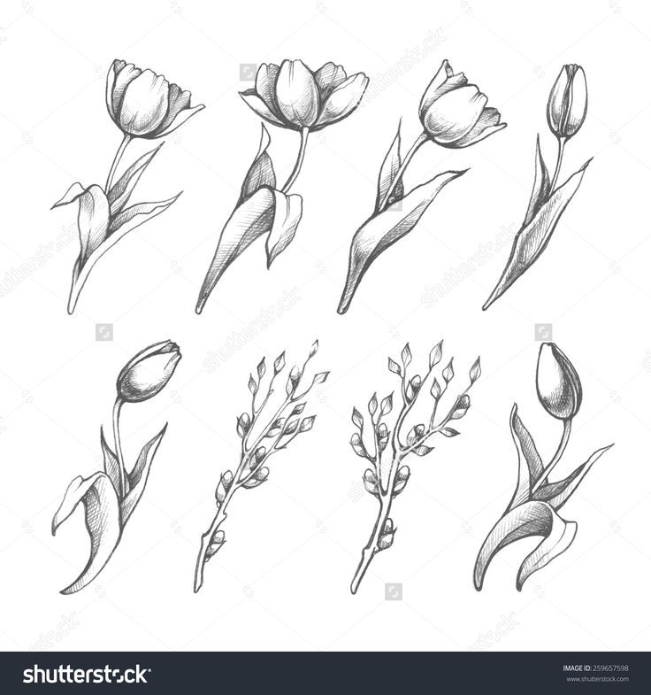 Set Of Spring Flowers Tulips Branches. Pencil Sketch Collection Vector Illustrat…