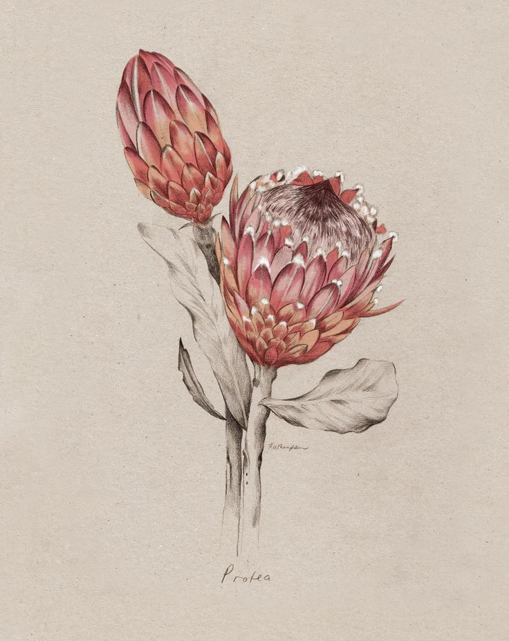The protea flower stands for change, transformation and courage. That's why …