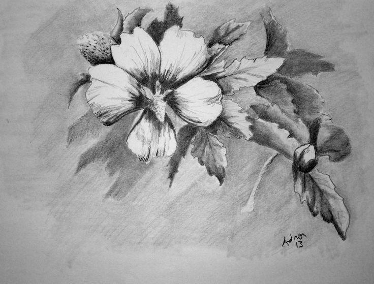 Beautiful Sketches of Flowers | Beautiful Pencil Drawings Of Flowers Pencil sket…