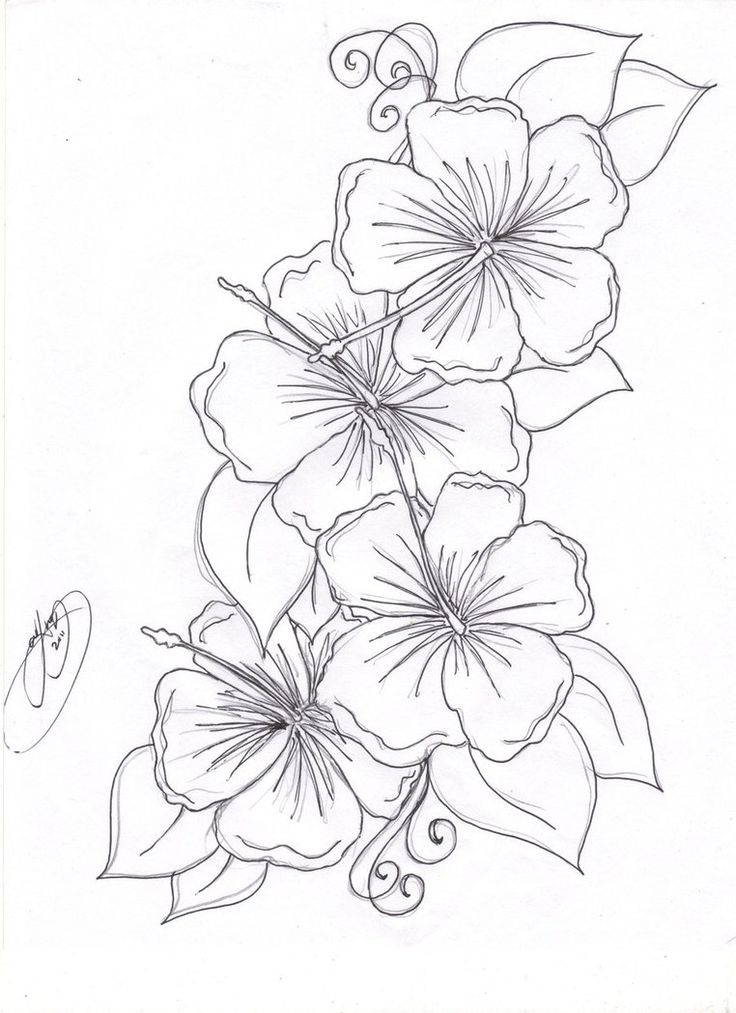 Hummingbird Hibiscus Tattoo Drawing | The Hibiscus Flowers Tattoo Pictures to Pi…