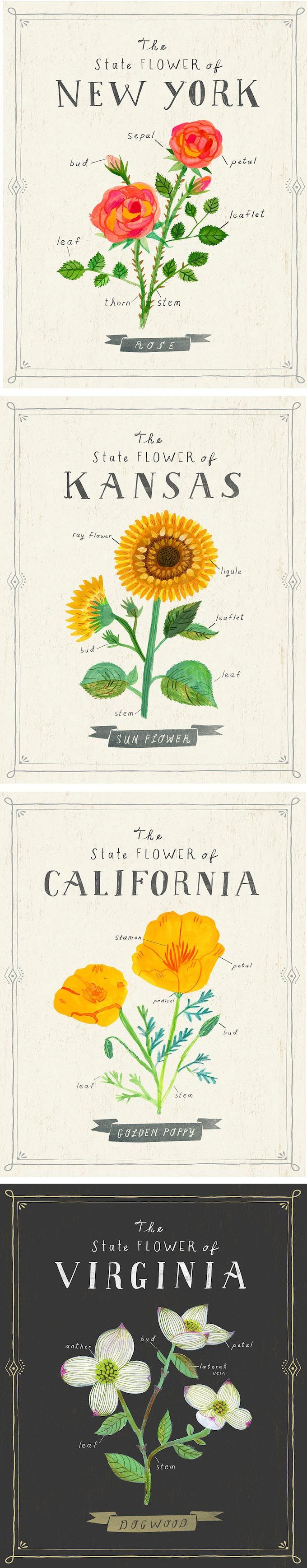 Sarah Walsh draws state flowers in a series that's both informative and beau…