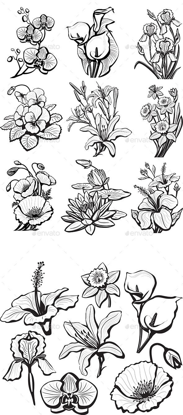 Set of Sketches of Flower – Flowers & Plants Nature