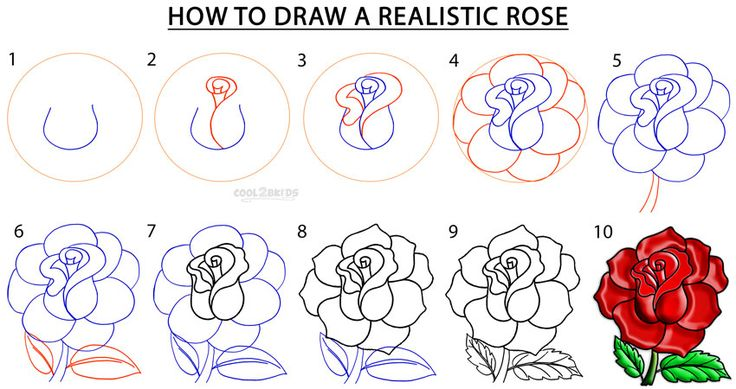 Step 1. The easiest way to begin sketching a rose is to make a fancy style S tha…