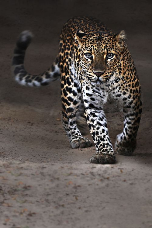 There is somthing magical about these animals. I adore the confidence and focus …