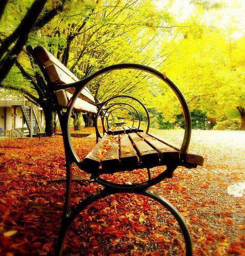 amazing photography park