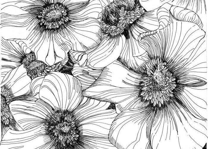 blackandwhite – Anemones by Angela Porter
