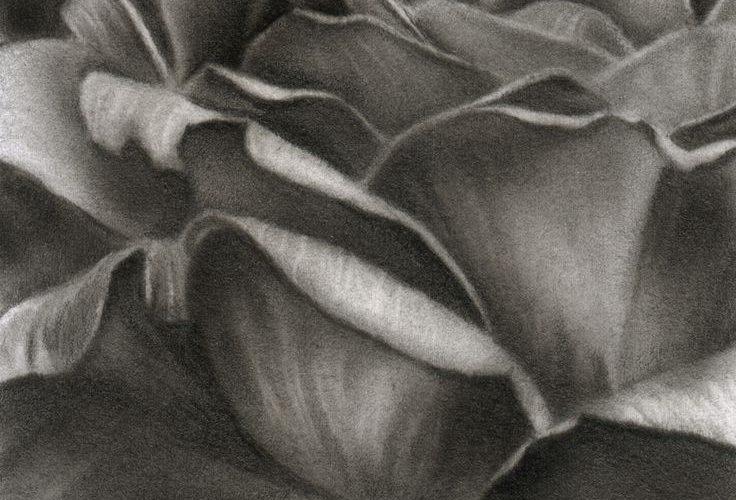 Pencil Drawings Of Flowers | Pencil Drawings Flowers