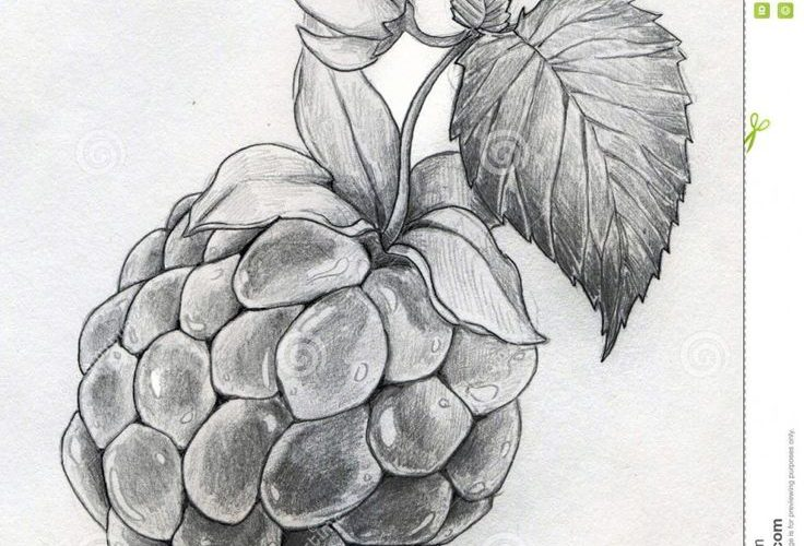 Pencil Sketches Of Flowers | Art Design Gallery