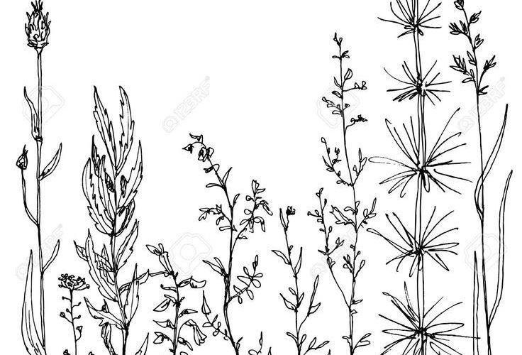 wild flower: floral composition with ink drawing herbs and flowers, doodle wild …