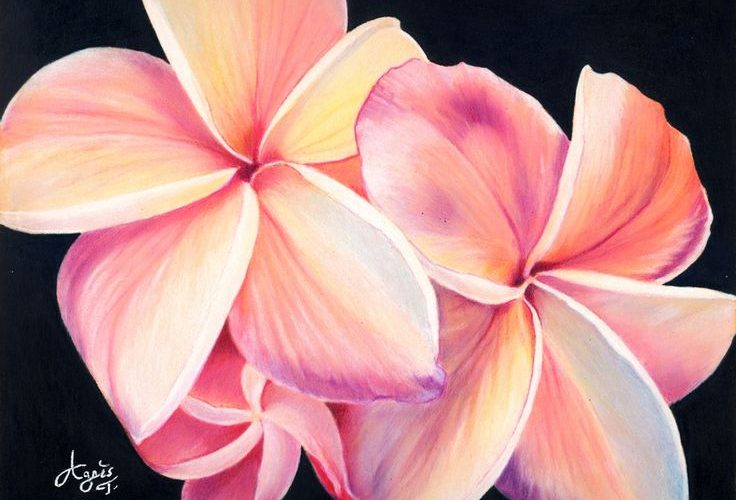 Plumeria flowers, X posted on Colored Pencil – WetCanvas