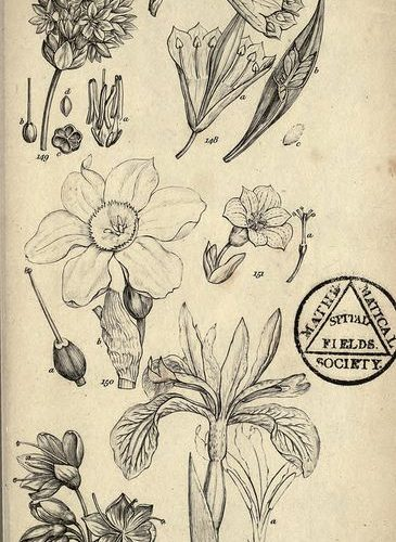 Sketches from 'A Grammar of Botany', Longman, London1821