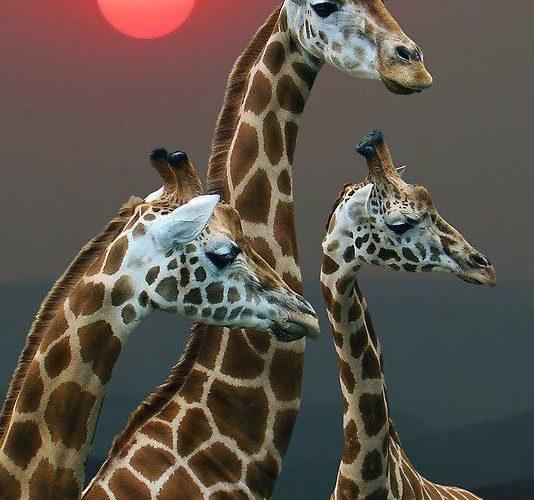stunning photography of animals  | 35 Beautiful and Stunning Wildlife Photograph…