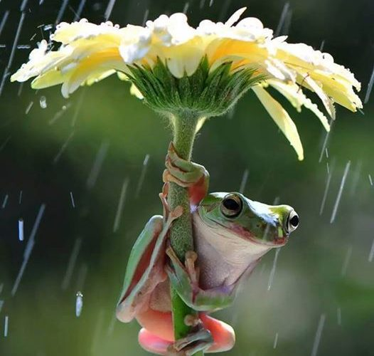 Frog widlife photography webneel.com/… | Design Inspiration webneel.com | Foll…