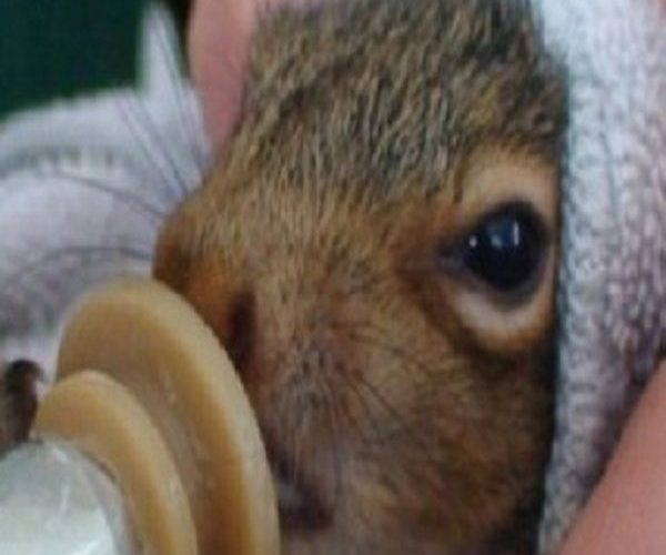 Pennsylvania Wildlife Center Gives Orphaned Animals A New Lease On Life #pennsyl…