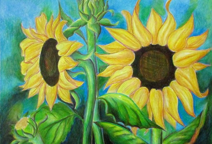 A very detailed step by step tutorial on how to draw sunflowers.  Ten different …