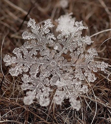Beautiful photos of real snowflakes captured using macro lens by Russian photogr…