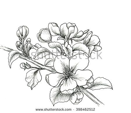 Hand drawn branch of cherry blossom isolated on white background. Hand drawn ill…