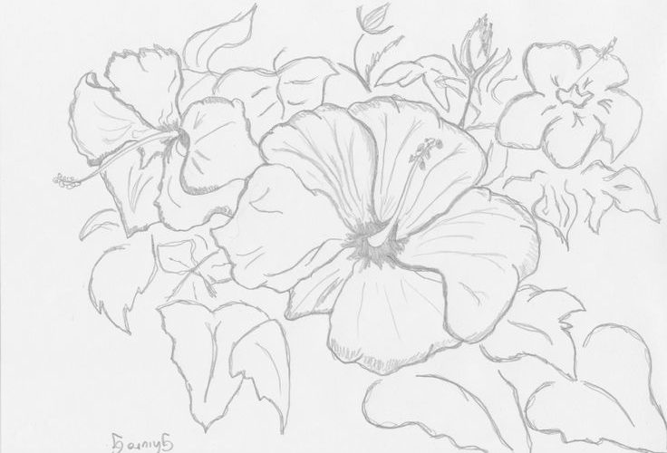 Sketches Of Flowers – Ciwall.com – Tattoo flower ideas