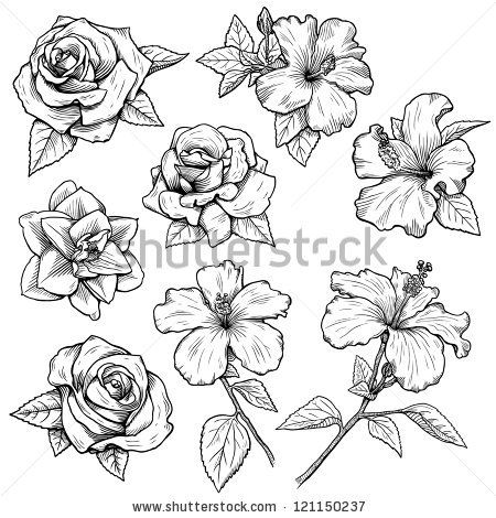 sketches of flowers – Google Search