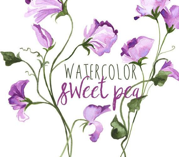 Watercolor Sweet Pea Spring Floral Border Graphics, Floral clipart of flowers, S…