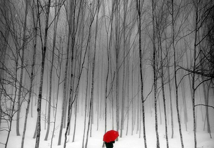 Bare limbs and a red umbrella